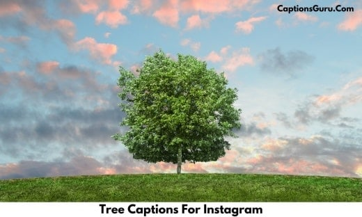 Tree Captions For Instagram