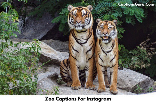 Zoo Captions For Instagram