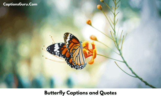 Butterfly Captions and Quotes